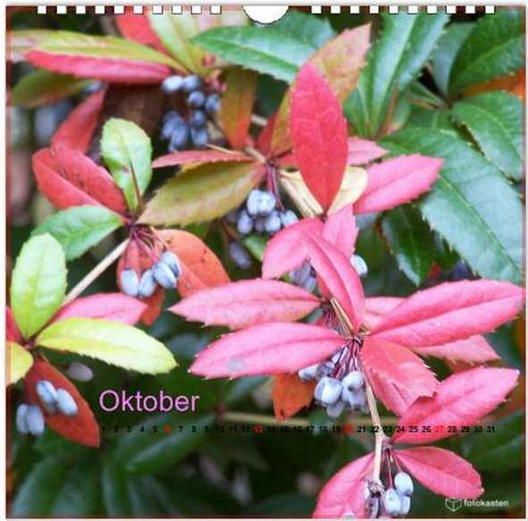 Oktober Digital