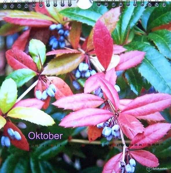 Oktober Original