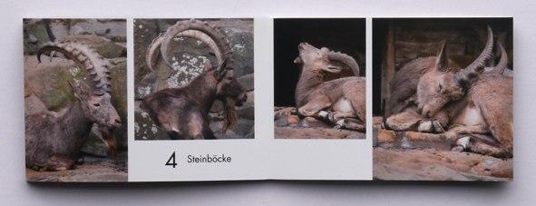 snapfish Druckergebnis Fotobuchseite